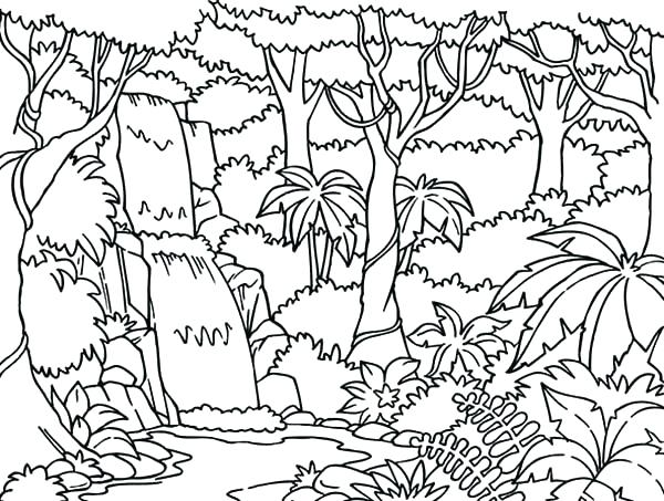 600x453 Here Are Tropical Rainforest Coloring Pages Images Tropical