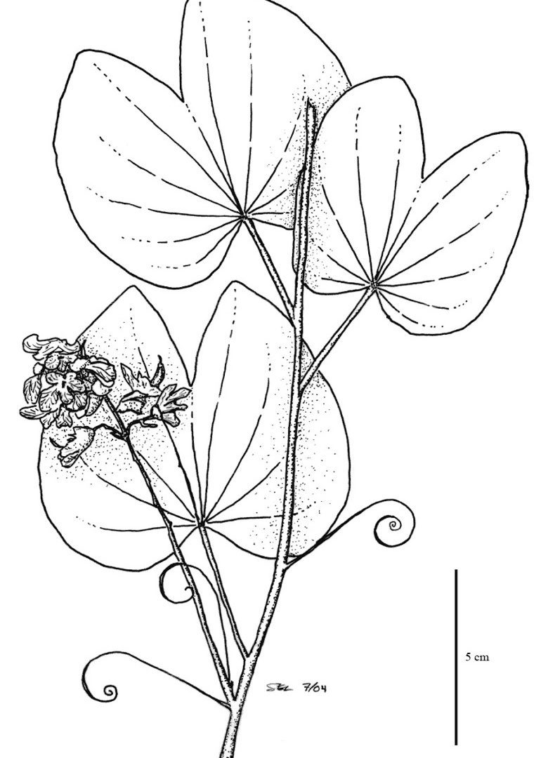 Jungle plants drawing at free for for Rainforest leaves coloring pages