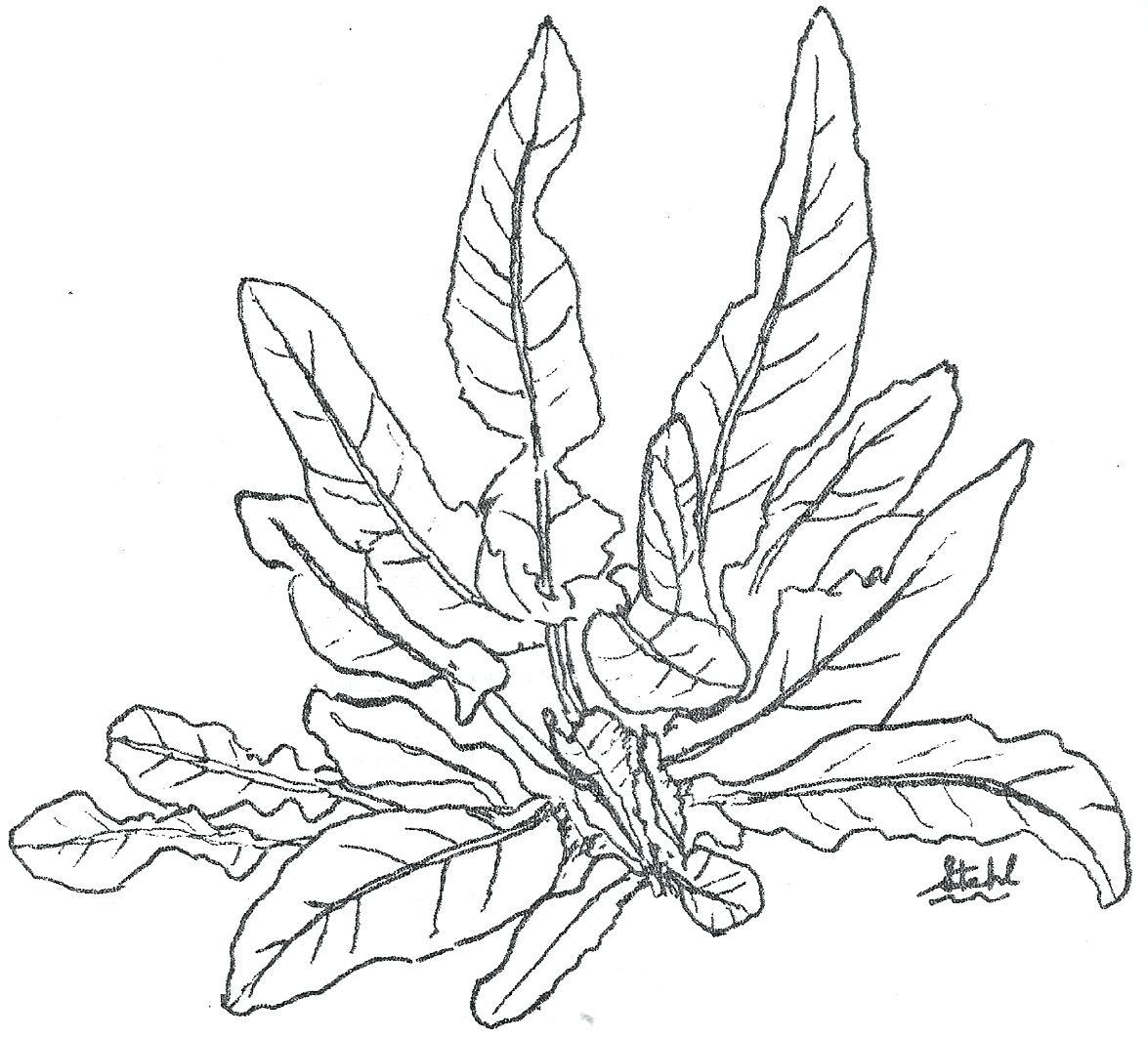 1175x1063 Coloring Rainforest Plants Pages Drawn Jungle 5 Tropical