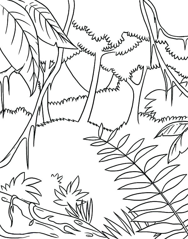 600x761 Complete Rainforest Coloring Pages Fee