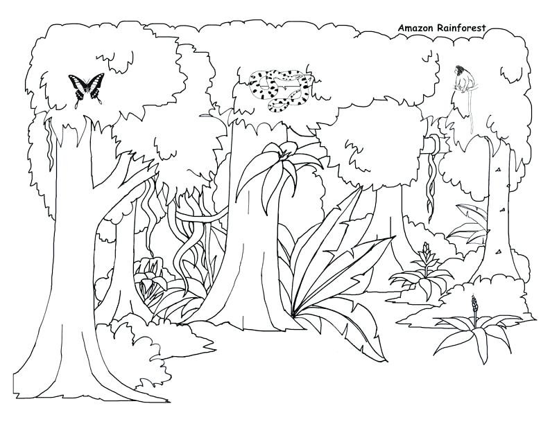 793x612 Jungle Coloring Pages And Awesome Jungle Coloring Pages Awesome