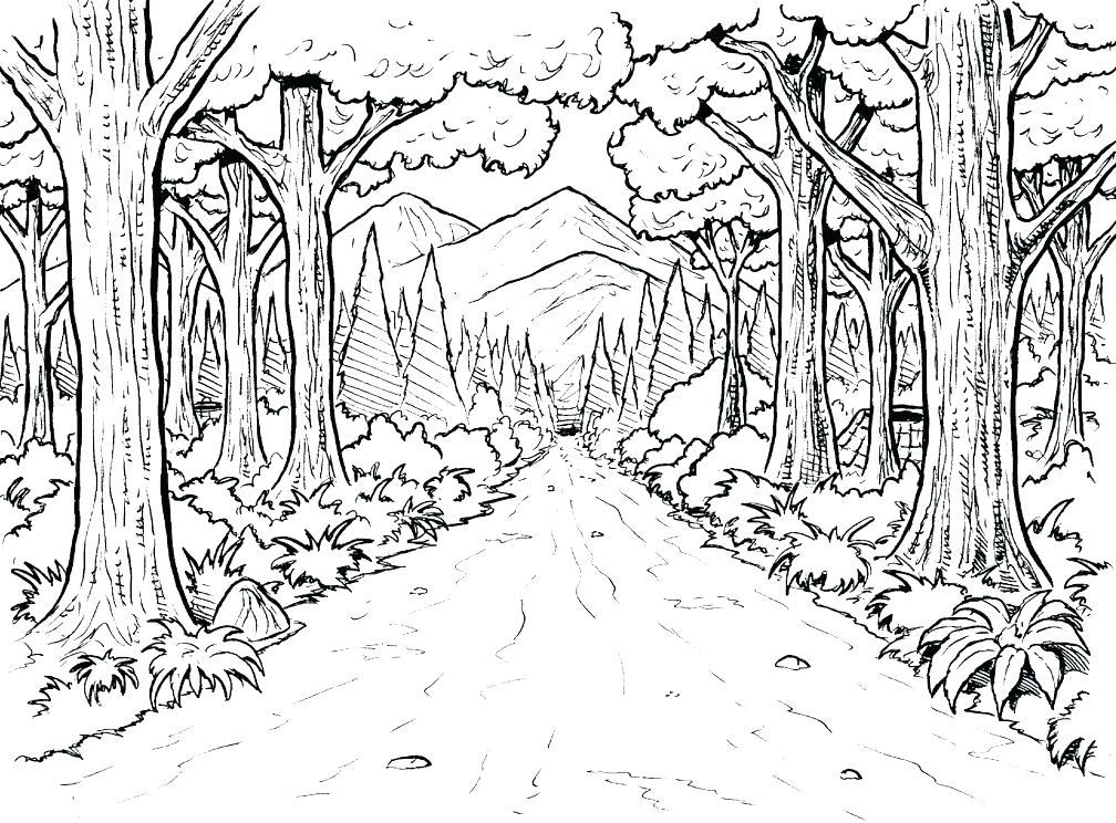 1008x744 Top Rated Rainforest Coloring Pages Pictures Awesome Tropic