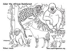 236x182 Safari Coloring Pages How To Draw A Rainforest Step 6 Jungle