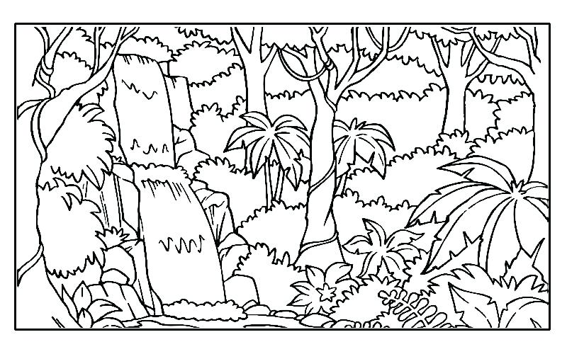 800x500 Jungle Printable Coloring Pages Also Drawing Wild Jungle Animals