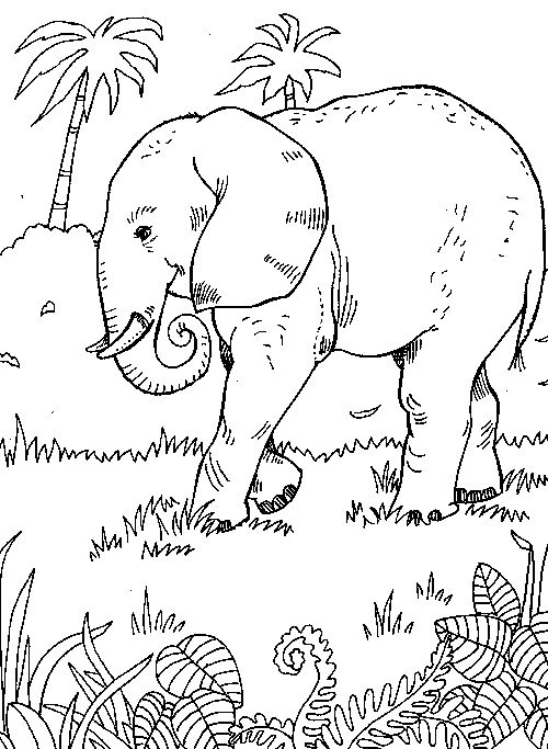 500x683 7 Best Jungle Animal Coloring Pages Images On Coloring