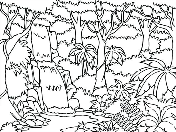 600x450 Jungle Coloring Page Trees Junction