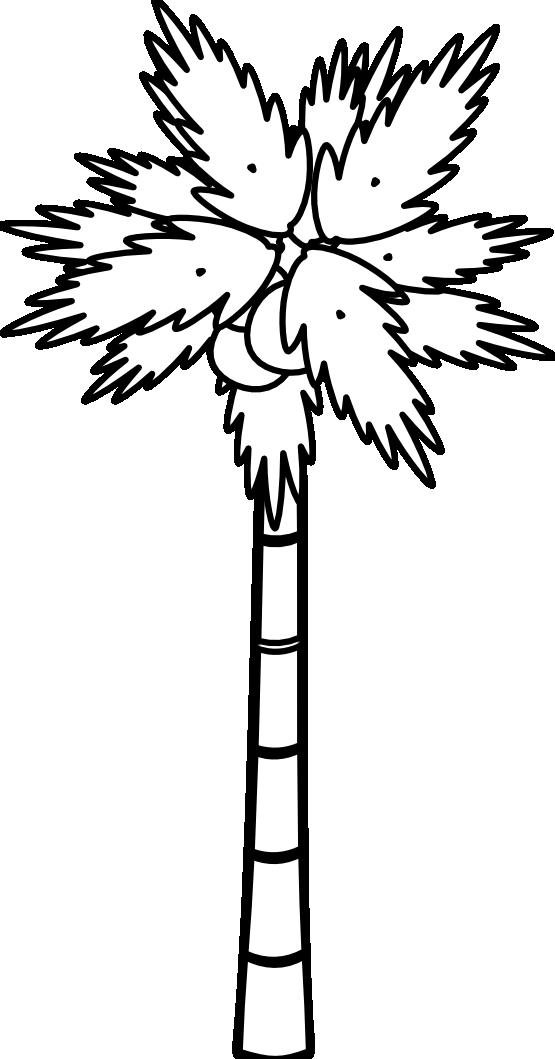 555x1059 Jungle Tree Clipart Black And White