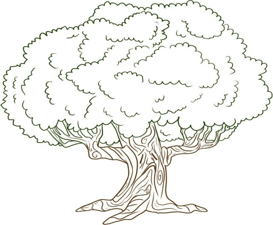 900x741 Nice Rainforest Trees Coloring Pages Contemporary