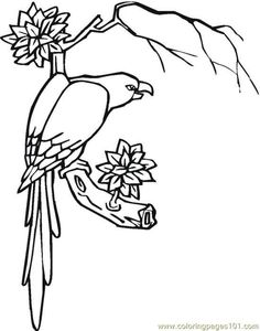 236x300 Jungle Coloring Pages Free Description Of Jungle Trees Coloring