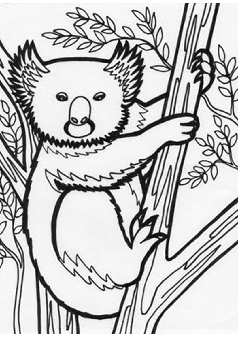 826x1169 Coloring Pages Of Koala On A Tree Coloring Pages