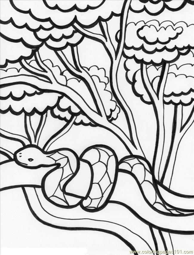 650x852 Rainforest Trees Coloring Pages