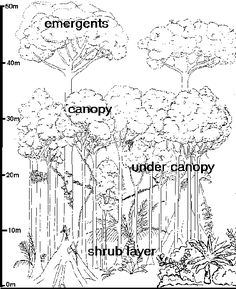 236x289 How To Draw Forest Plants