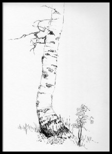 218x300 Out Sketching Quaking Aspen. Part 3. Drawing A Quaking Aspen