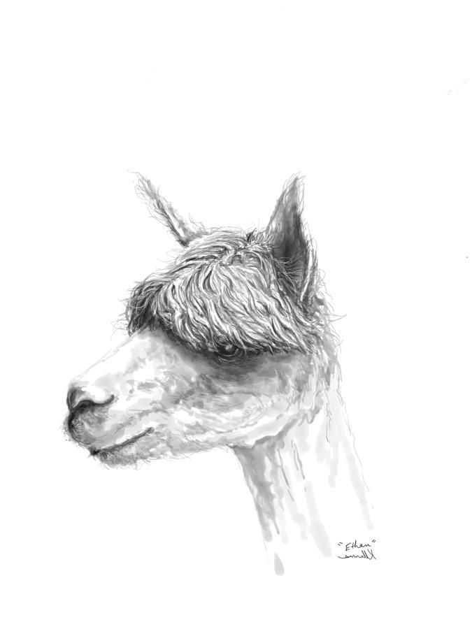 675x900 Ethan Drawing By K Llamas