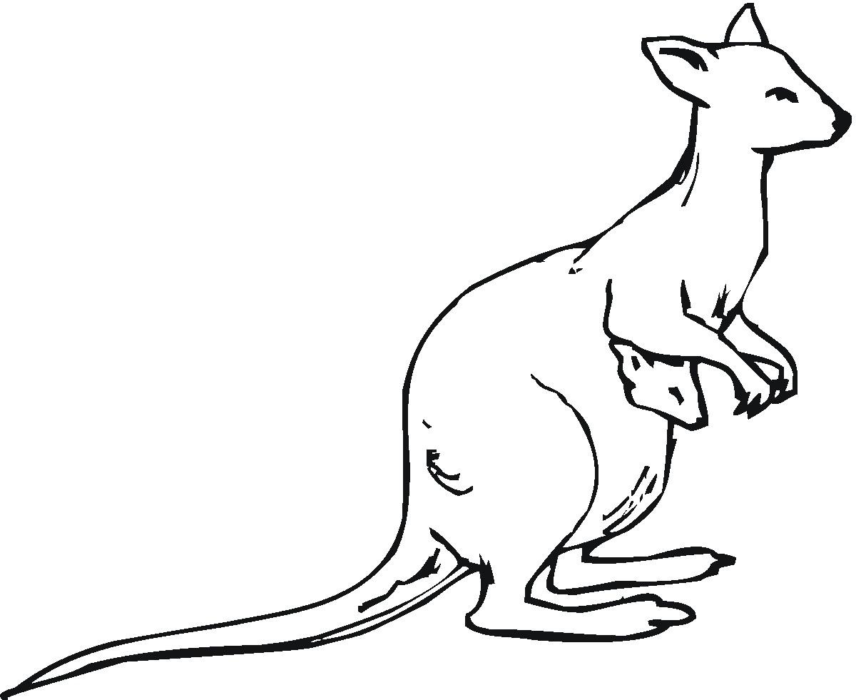 1200x981 Image result for kangaroo line drawing kangaroo Pinterest
