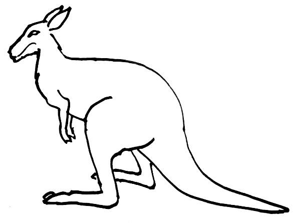 585x445 Kangaroo Coloring Pages