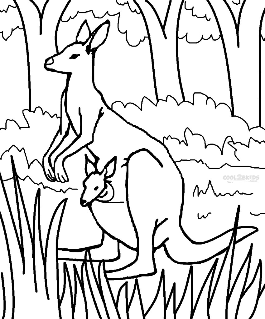 850x1020 Kangaroo Coloring Pages Preschool To Cure Print Draw Printable