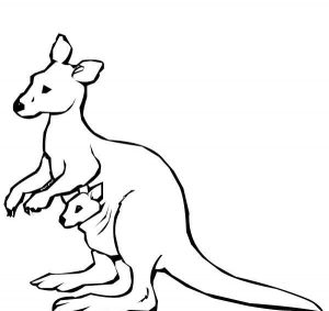 300x283 Kangaroo Coloring Pages For Kids
