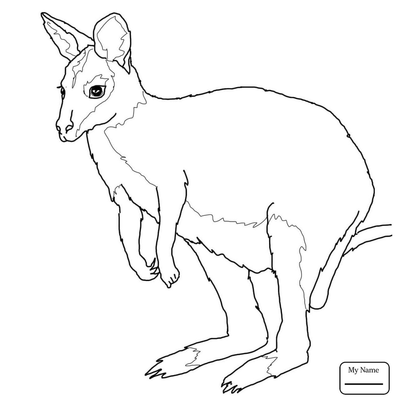 1265x1281 Jumping Kangaroo In Flight Mammals Kangaroos Coloring Pages