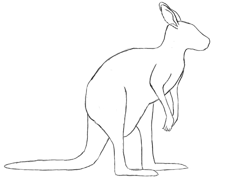 244x300 Kangaroo Coloring Pages For Kids 800x600 Drawing