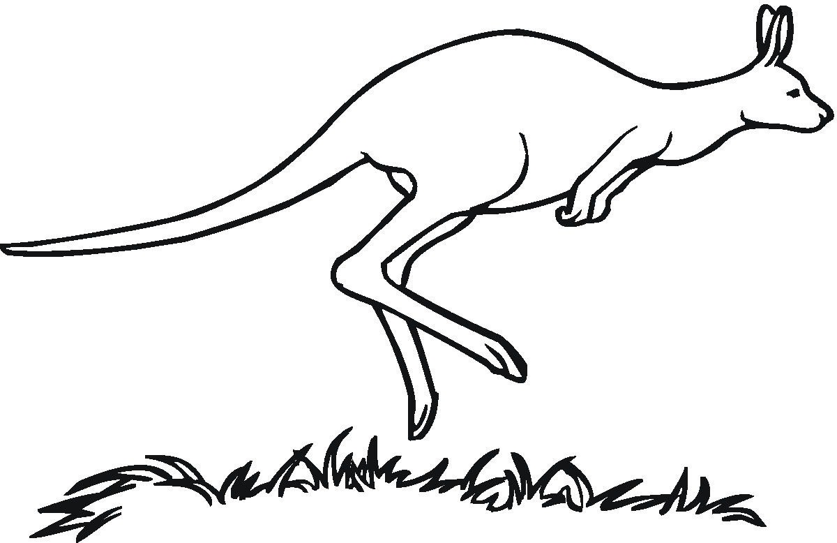 1200x778 Kangaroo Coloring Pages Coloring Page For Kids