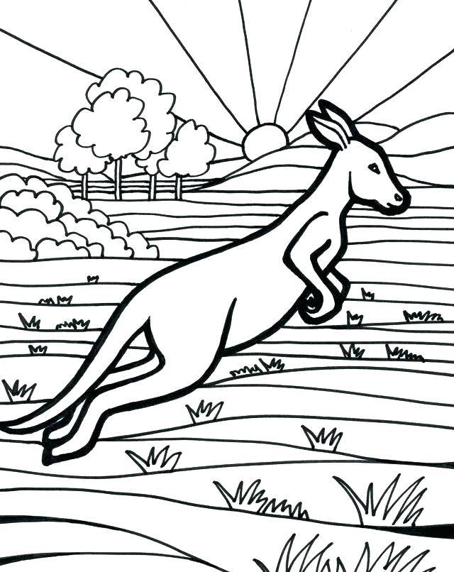 640x806 Delightful Kangaroo Coloring Page Free Download Baby Sheets
