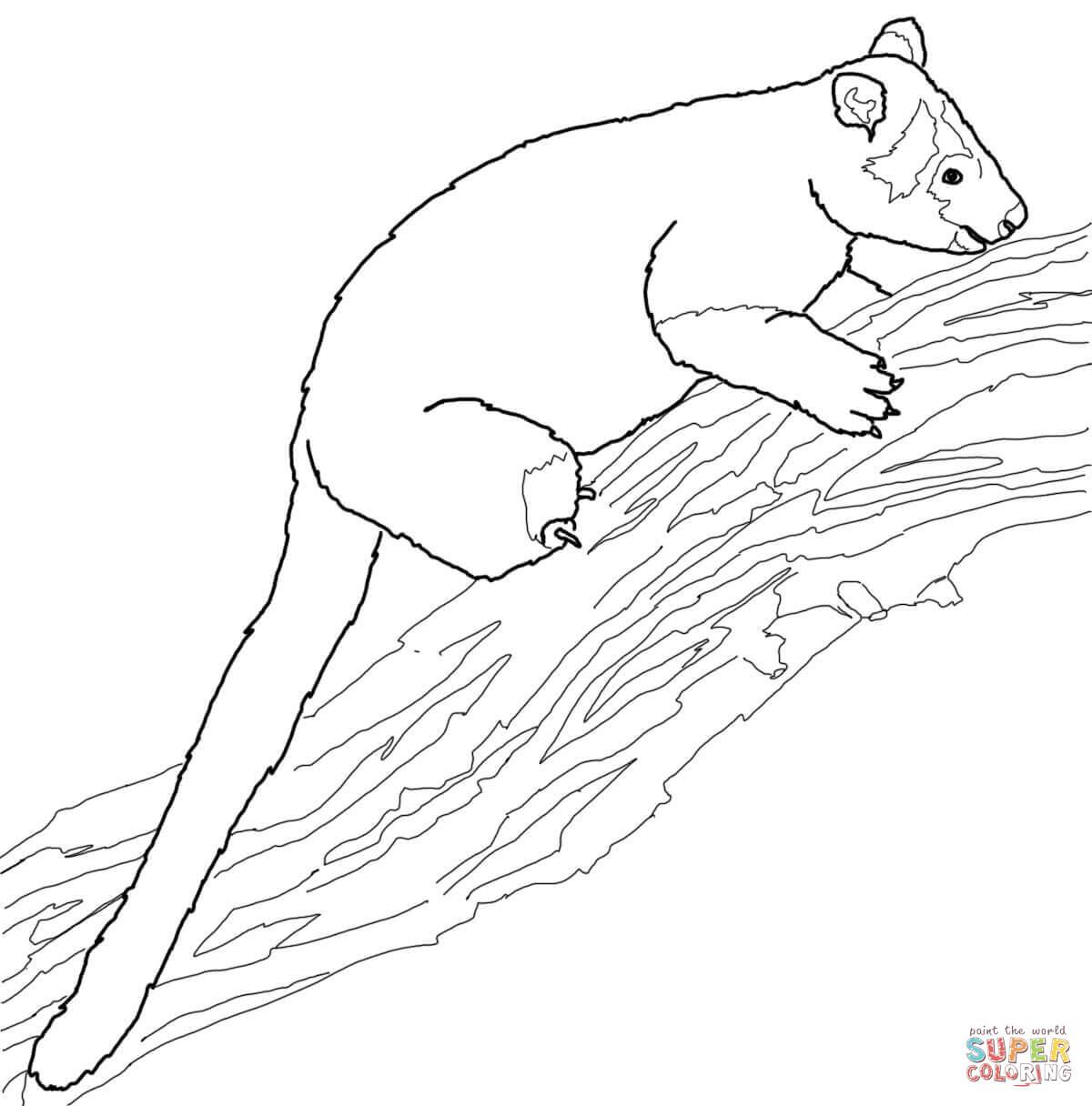 1200x1216 Tree Kangaroo Coloring Page Free Printable Pages