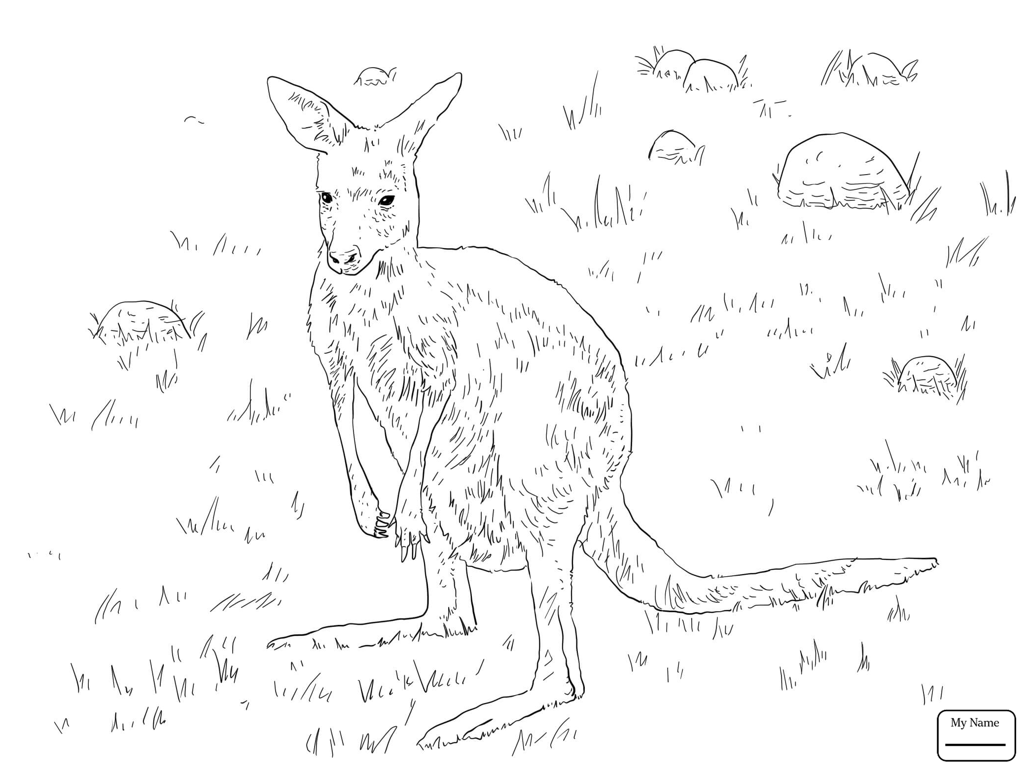 Kangaroo Outline Drawing at GetDrawings