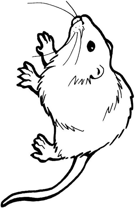 Kangaroo Rat Drawing at GetDrawings Free for