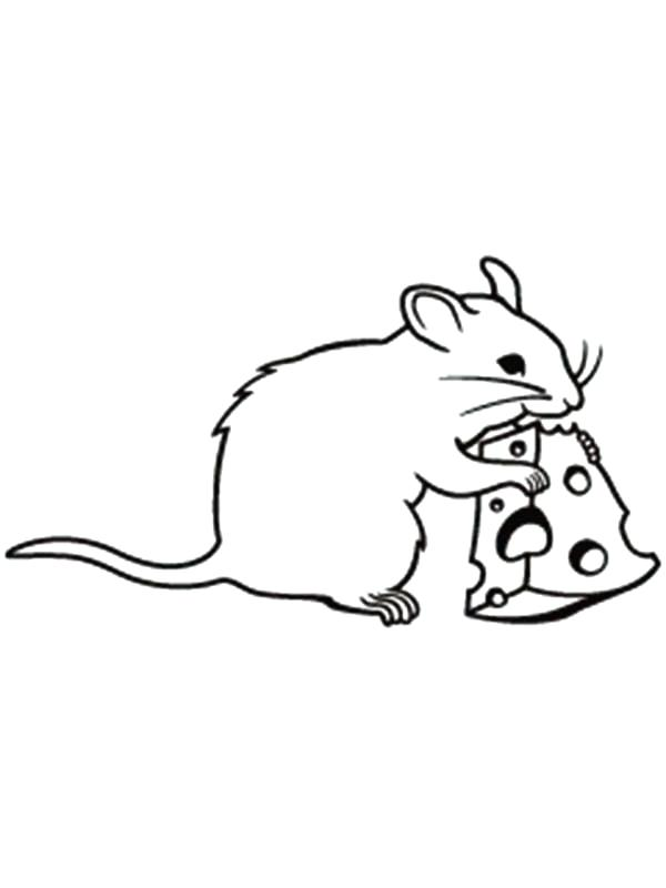 600x800 Rat Coloring Page Fat Mouse And Rat Coloring Pages Kangaroo Rat