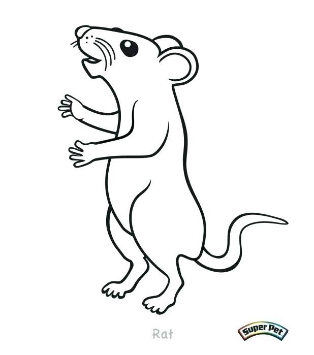 618x699 Rat Coloring Page Affan