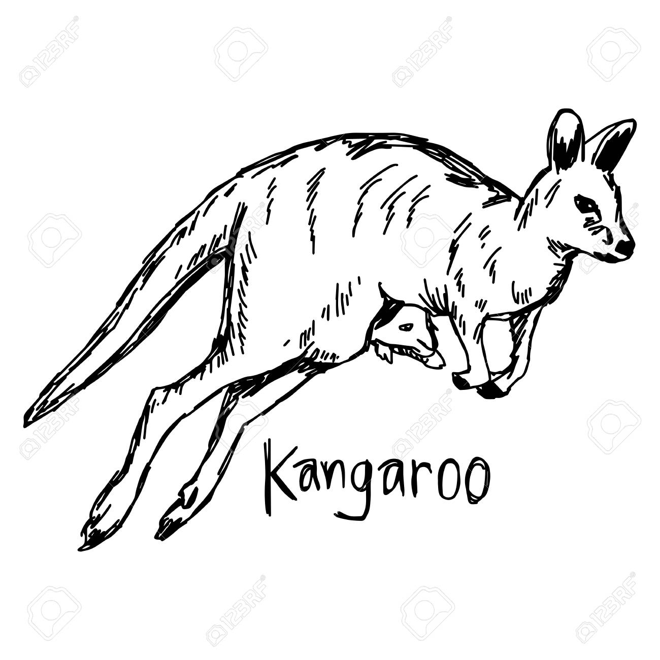 1300x1300 Kangaroo With Its Baby In The Pocket