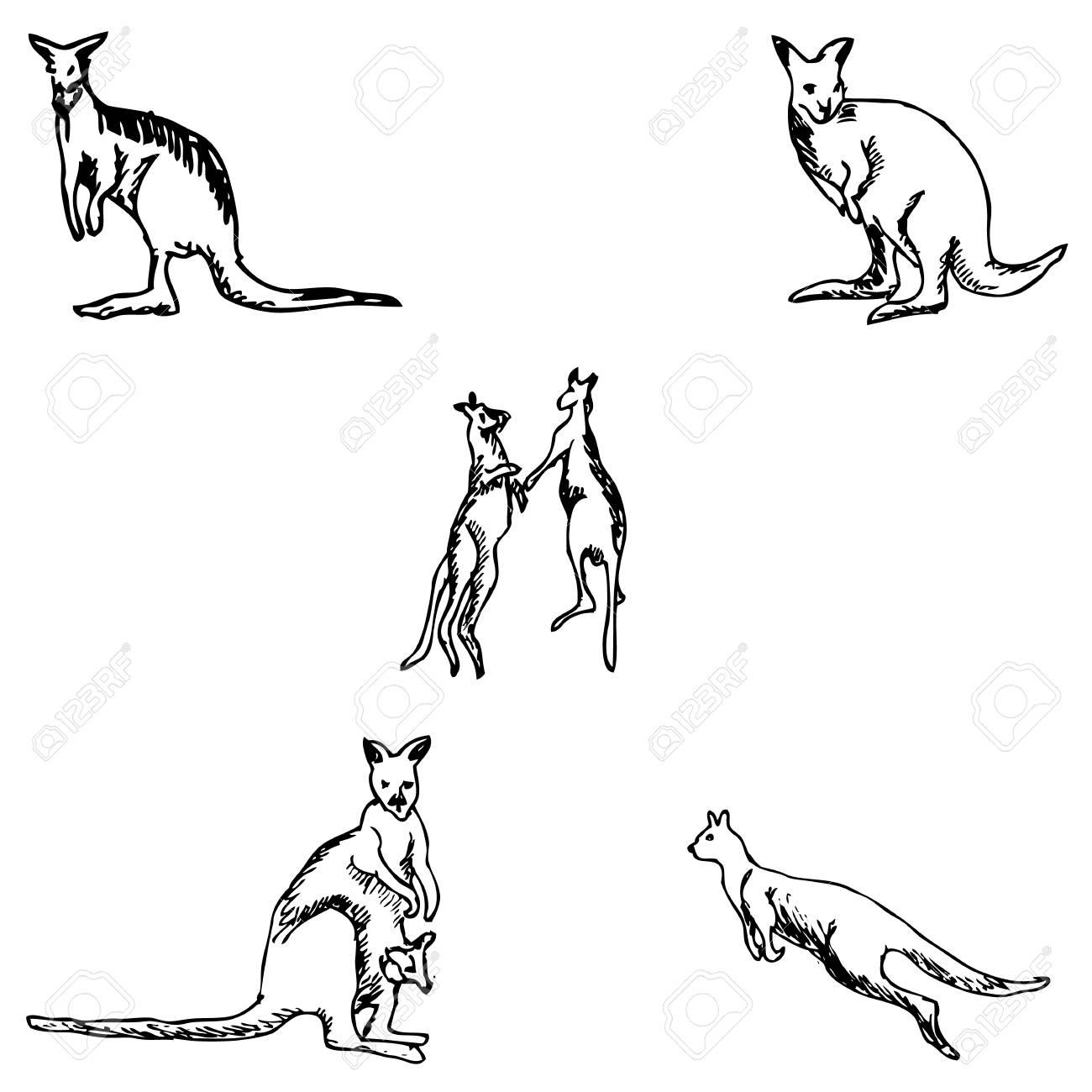 1300x1300 Kangaroo. A Sketch By Hand. Pencil Drawing. Vector Image Royalty