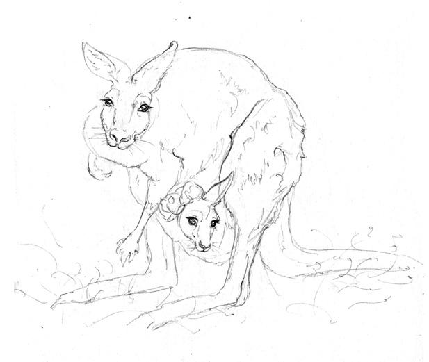 617x521 The World's Best Photos Of Kangaroo And Pencil