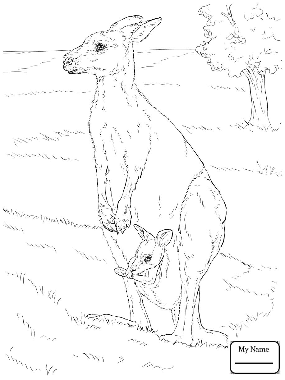 917x1223 Mammals Kangaroos Eastern Kangaroo With Her Joey Kangaroos