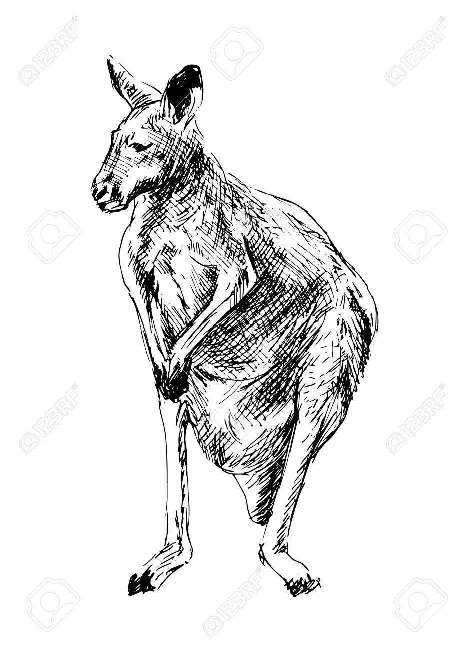 928x1300 Drawing Of A Kangaroo Vector Illustration Royalty Free Cliparts