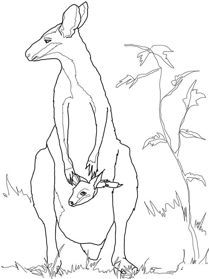 700x933 Drawn Kangaroo Australian Kangaroo