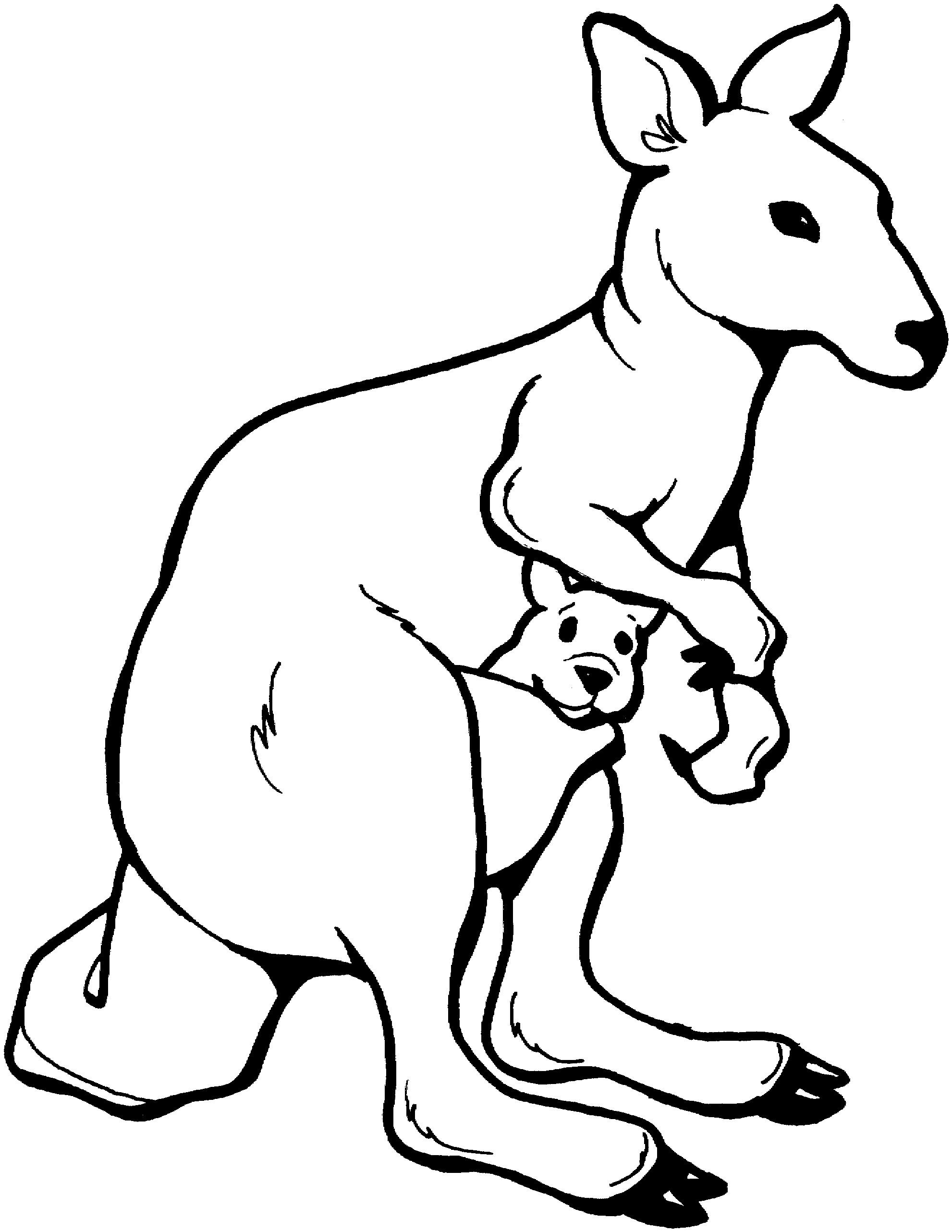 1982x2564 Drawn Kangaroo Animal Movement