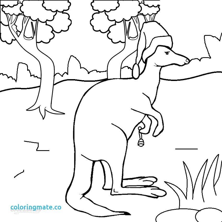 850x850 31 Kangaroo Coloring Page
