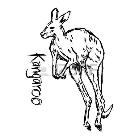 450x450 Male Kangaroo Stock Photos. Royalty Free Male Kangaroo Images