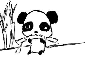 300x250 Panda Eats Bamboo