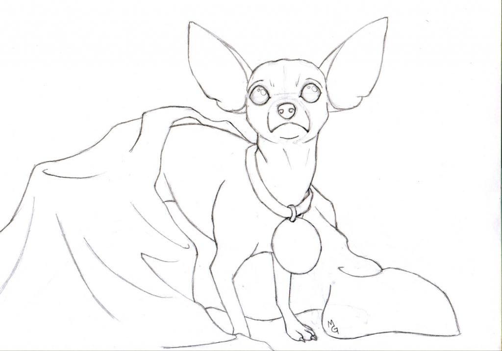 1024x717 How To Draw A Chihuahua Chihuahua The Kawaii Ferret