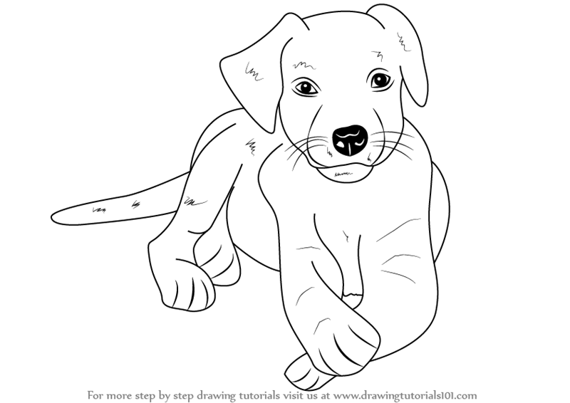 800x566 Learn How To Draw A Labrador Puppy (Farm Animals) Step By Step