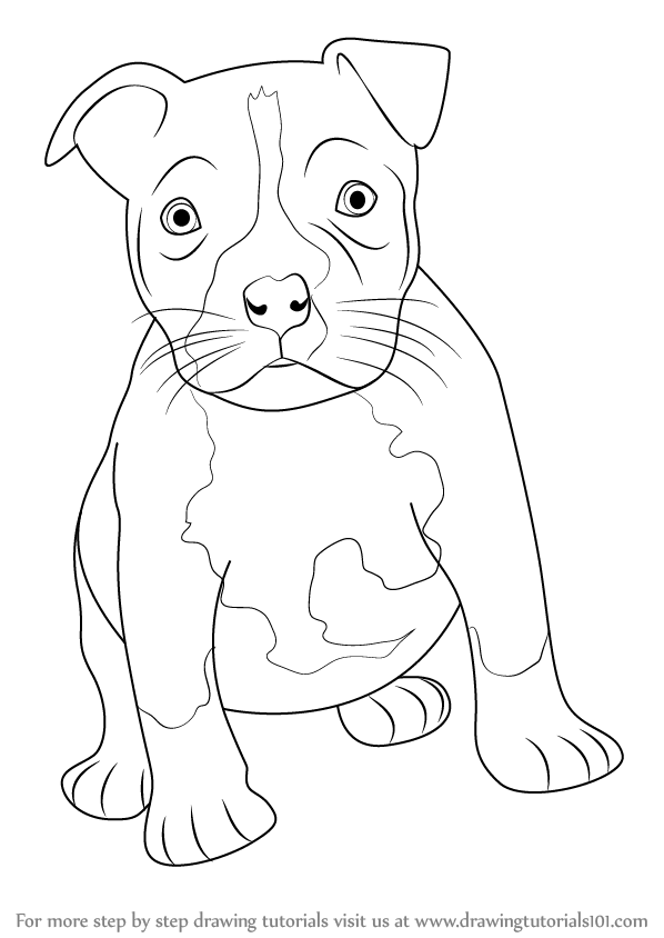 598x844 Learn How To Draw A Pitbull Puppy (Other Animals) Step By Step