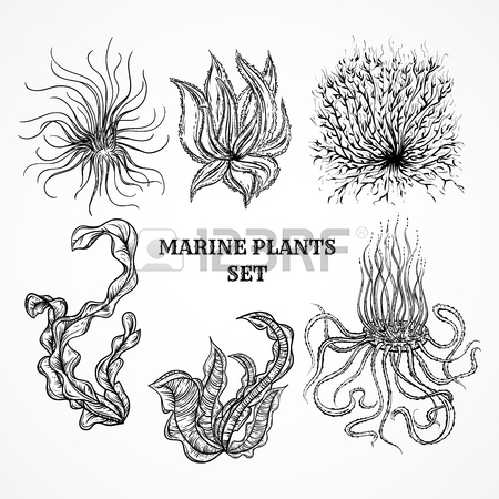 450x450 864 Kelp Stock Vector Illustration And Royalty Free Kelp Clipart