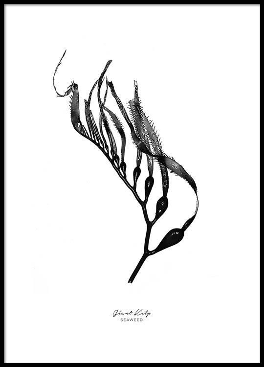 540x750 Kelp Seaweed Poster