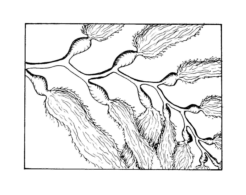 1483x1174 How To Draw Kelp Step By Step