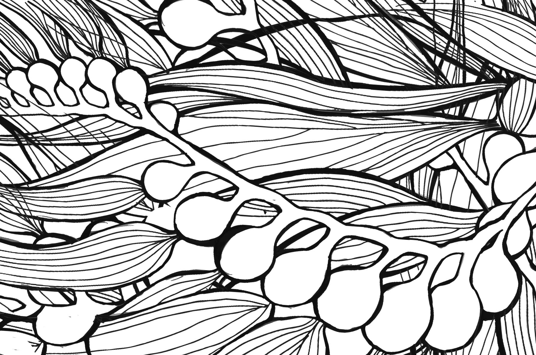 1787x1184 Kelp Drawing Rusted Raindrop