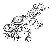 240x224 Bull Kelp Drawing (With Little Bulls!) Seaweed