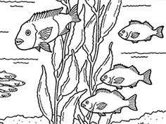 236x177 Crafter's Workshop Template 6x6 Kelp Forest By Crafters Workshop